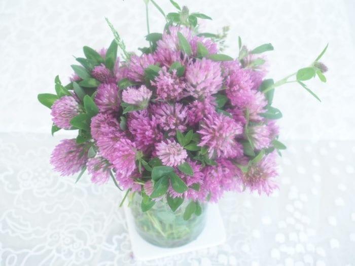 Fleur de trele en cuisine